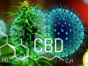 CBD aumenta la eficacia