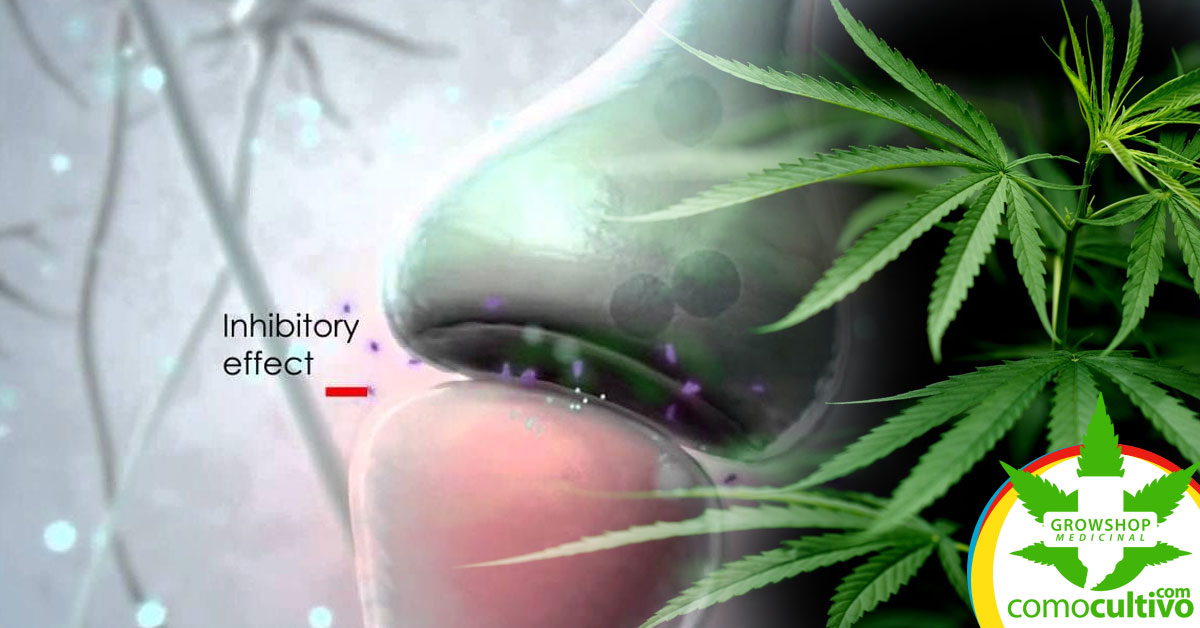 endocannabinoide alivia el dolor