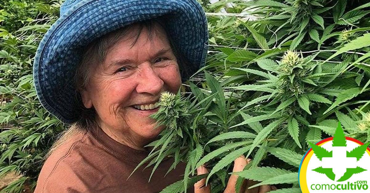 Ancianos que utilizan Cannabis