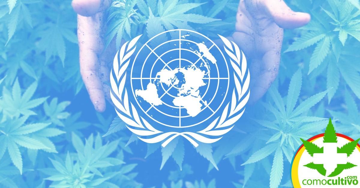 ONU votará sacar la Cannabis