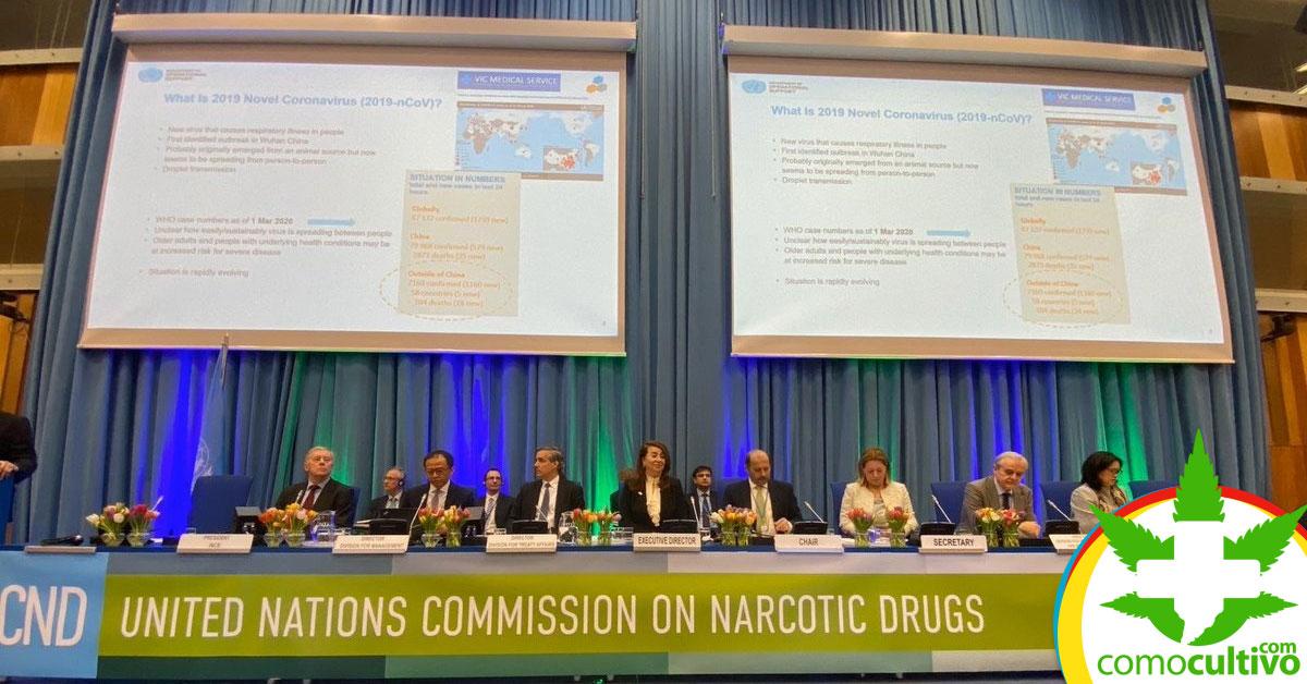 ONU reconoce el Cannabis Medicinal