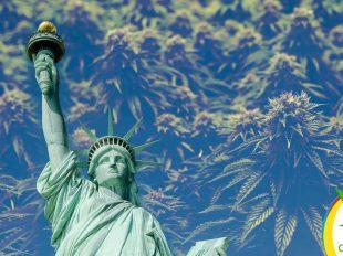Nueva York legaliza la Marihuana
