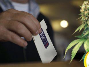 Constituyentes y Alcaldes a favor del Cannabis