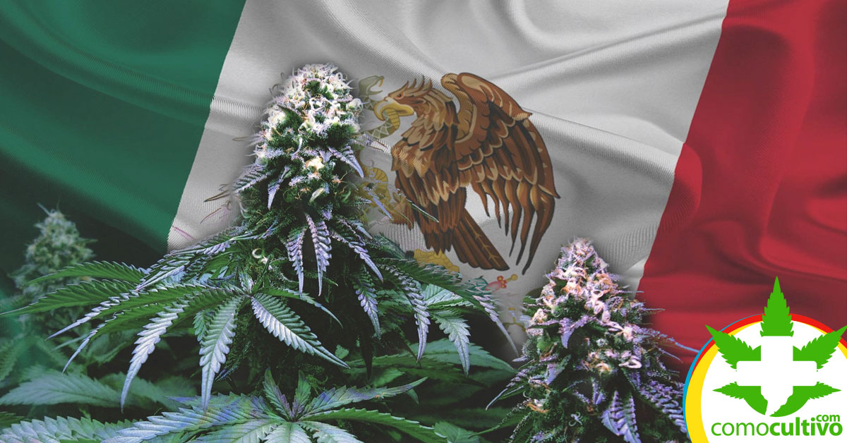 México Legaliza la Cannabis