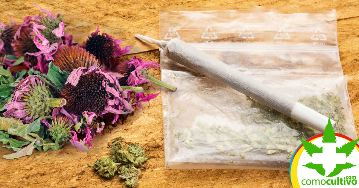 Hierbas para potenciar el Cannabis